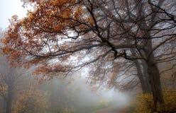 在rainfairy森林雾自然树以后的春黄菊花 免版税图库摄影