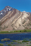 在Rangdum修道院, Zanskar谷,拉达克,查谟和克什米尔,印度附近的一个风景 库存照片