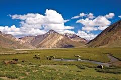 在Rangdum修道院, Zanskar谷,拉达克,查谟和克什米尔,印度附近的一个风景 免版税库存图片