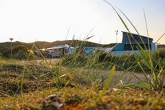 在raod旁边放牧生长,带领通过一个营地在荷兰 图库摄影