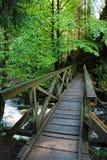 在Ravennaschlucht的Brige在德国黑森林 库存照片