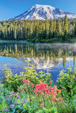 在Reflection湖的更加多雨的野花 免版税库存图片