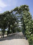 在reggia都灵venaria附近的di flowers 免版税库存照片
