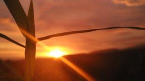 在Rembangan和草的日落 库存图片