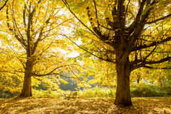 在Rembrandpark阿姆斯特丹的秋天 图库摄影