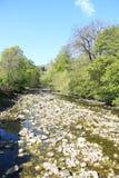 在Ribble的春天 库存图片
