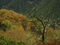 在Ribeira骶骨的秋天 免版税库存照片