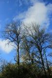 在Ridgefield全国野生生物保护区华盛顿州的秋天季节 库存照片