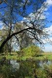 在Ridgefield全国野生生物保护区华盛顿州的赤裸树 免版税库存图片