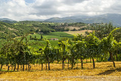 在Rieti和Terni之间的葡萄园 免版税库存图片