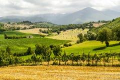在Rieti和Terni之间的葡萄园 免版税图库摄影