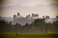 在Rinjani火山的看法在龙目岛海岛,印度尼西亚。 免版税库存图片