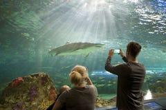 在Ripley的水族馆加拿大的鲨鱼坦克 免版税库存图片