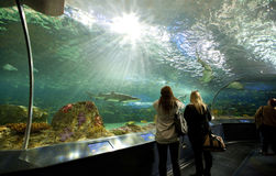 在Ripley的水族馆加拿大的鲨鱼坦克 免版税图库摄影