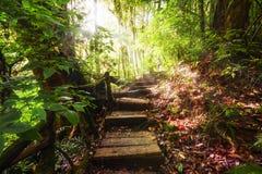 在ropical雨林泰国密林的迁徙的足迹  免版税库存照片