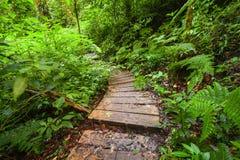 在ropical雨林泰国密林的迁徙的足迹  免版税库存图片