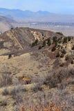 在Roxborough国家公园,科罗拉多的野生生物 免版税库存图片
