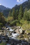 在Roztoka谷的Roztoka小河 Tatra国家公园 高Tatr 免版税图库摄影