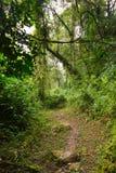 在ruwenzori山的小径 免版税库存照片