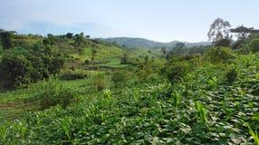 在Rwenzori山附近 免版税库存照片