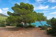 在Sa卡拉市caleta旁边,伊维萨岛海岸的树  库存照片