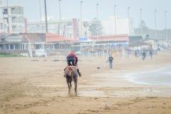 在Saaidia海滩的马 免版税库存照片