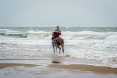 在Saaidia海滩的马 免版税库存图片