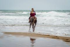 在Saaidia海滩的马 库存照片