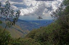在Salento,哥伦比亚附近的Cocora谷 图库摄影