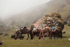 在Salkantay山艰苦跋涉的骡子 库存照片