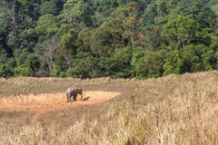在saltlick的亚洲大象在Khao亚伊国家公园,泰国 库存照片
