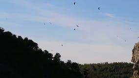 在Salto del Gitano,西班牙附近的观看的兀鹫 股票视频