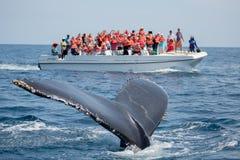 在Samana、多米尼加共和国和torist郑在的驼背鲸尾巴 库存图片