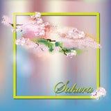 在sanft背景的开花的佐仓花 图库摄影