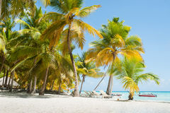 在Saona海岛上的热带海滩 免版税库存照片