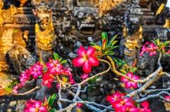 在Saraswati寺庙的桃红色花在Ubud,巴厘岛 免版税图库摄影