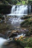 在Satina河的瀑布 免版税库存照片