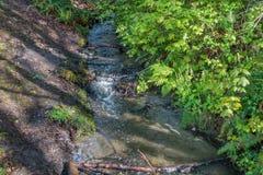 在Seahurst公园的小河 库存照片