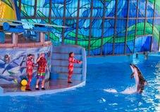 在Seaworld的海豚 免版税库存照片