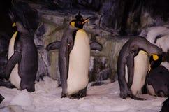 在Seaworld,奥兰多的企鹅 免版税库存照片