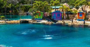 在Seaworld,澳大利亚的海豚展示 股票录像