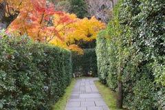 在Seiryuden日本人寺庙的一条绿色植物路 库存照片