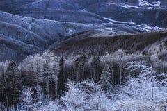 在Semenic山罗马尼亚的冬天不可思议的场面 库存图片
