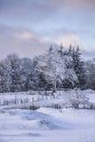 在Semenic山罗马尼亚的冬天不可思议的场面 图库摄影
