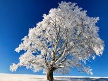 在Semnoz滑雪驻地的树在法国 免版税图库摄影