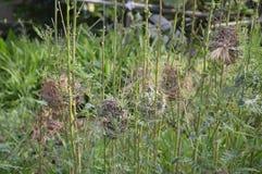 在sesbania树的鸟巢在自然庭院里 库存照片
