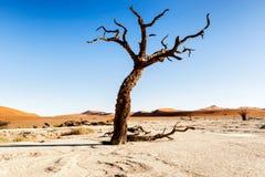 在Sesriem附近的死的Vlei在纳米比亚 免版税图库摄影