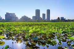 在Shinobazu池塘的莲花 库存图片