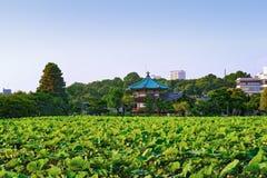 在Shinobazu池塘的莲花 免版税图库摄影