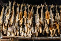 在Shiraoi阿伊努的村庄博物馆里面房子的干三文鱼在北海道,日本 库存照片